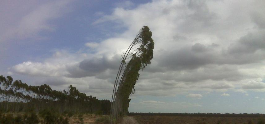 timber plantation mtubatuba 2010