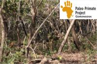 Baboons in Gorongosa, Susana Carvalho